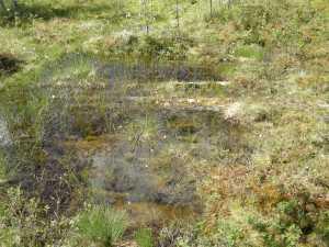 Detalj av kavelbro. I vattenspegeln i myren syns flera stockar lagda intill varandra © Norrbottens museum.
