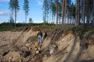 """Olof söker boplatsspår grustäktskanten på kulle 1. """"Det borde finnas, det måste finnas en boplats på den här kullen också…!"""" Foto Frida Palmbo"""
