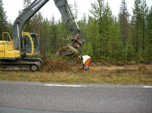 Ha! Du missade mig! (Grävmaskin vs arkeolog) © Norrbottens museum. Foto Åsa Lindgren