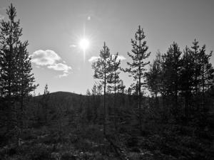 Markbygden. Foto: Daryoush Tahmasebi © Norrbottens museum