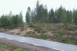 Kangosboplatsen (Raä Junosuando 22:1). Sandkullen där boplatsen ligger. ©Norrbottens museum. Foto Olof Östlund