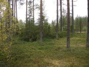 Tjärdalen som hittades längs med väg 555 syns som en upphöjning i mitten av bilden © Norrbottens museum