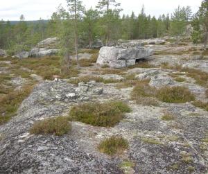 Området med lagda stenringar. Kala hällor och enstaka tallar. ©Norrbottens museum. Foto Olof Östlund
