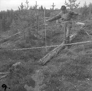 Herbert Wigenstam avbildad vid undersökning av en fångstgrop i Skuttejaure, Arvidsjaurs kommun.