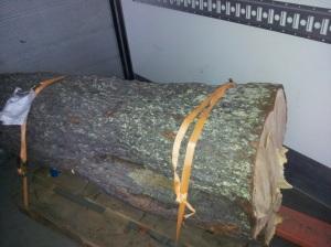 Här ser ni en bild på stocken med tillhörande bläcka. Fotograf: Jimmy Renlund © Norrbottens museum