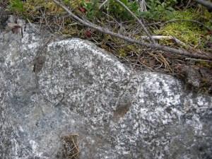 Raä Piteå socken 1523, ett stenbrott för granit, be-stående av en grop där fyra spräckta stenblock lig-ger. Här detalj av ett av de två av blocken med spår av handborrade hål.