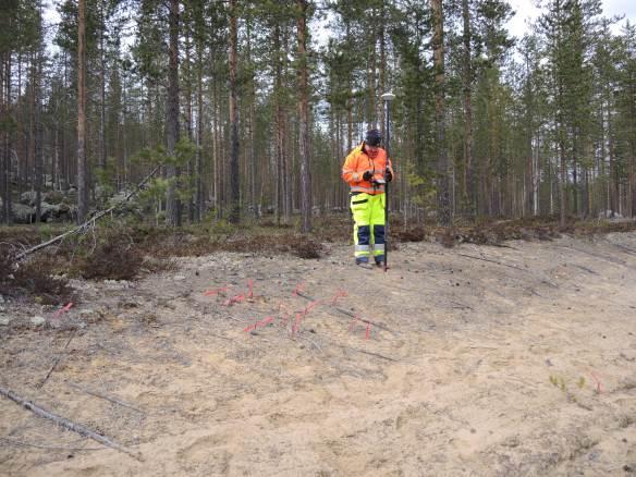 Carina mäter in fynd av skörbränd sten, som markerats med spik och röda märkband © Norrbottens museum