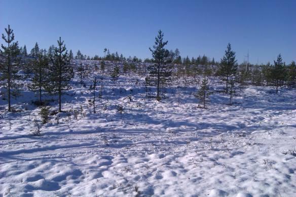 Svårt att granska tips när snön har lagt sig © Norrbottens museum