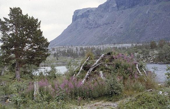 Kåta vid Satisjaure. Foto: Björn Allard 1958. Utgången upphovsrätt. Finns med i Riksantikvarieämbetets bilddatabas Kulturmiljöbild.