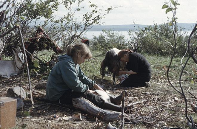 Mjölkning av get vid Satisjaure. Foto: Björn Allard 1958. Utgången upphovsrätt. Finns med i Riksantikvarieämbetets bilddatabas Kulturmiljöbild.