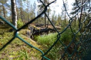 Ett av gruvhålen på Bruksberget.