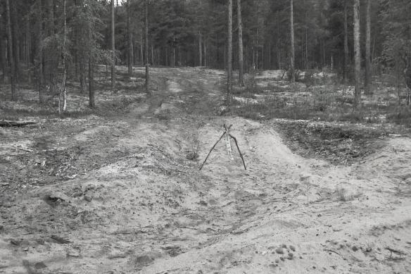 Raä 322:1 Nyhittad boplats år 2000. Tillräckligt oskadad för att en arkeologisk undersökning skulle gå att genomföra två år senare. Foto Olof Östlund ©Norrbottens museum.