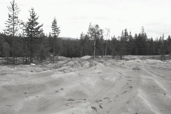 Raä Överluleå 418:1, en boplats av stenålderskaraktär som var känd sedan tidigare, men ändå blivit sönderkörd. Foto Olof Östlund ©Norrbottens museum.