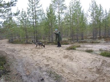 Gunilla Lindbäck och Cadja söker av den sönderkörda boplatsen