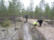 Gunilla Lindbäck och Cadja söker brända ben i körspåren. Frida Palmbo och Åke Naalisvaara har gjort fynd av brända ben.