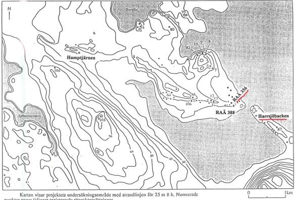 En illustration ur den rapport som skrevs på 1990-talet om den första Harrsjbackenboplatsen som undersöktes. Det grå är havet på en nivå 25 m högre än idag. Raä Bureå 356. Den gamla harrsjön är en skyddad, grund lagun. Bild: Skellefteå museum.