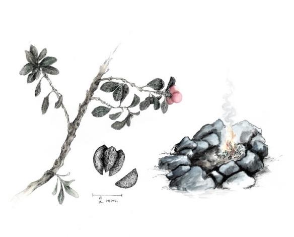 Mjölon1